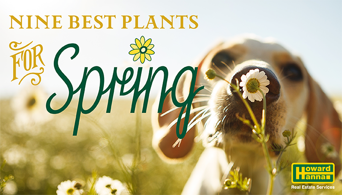 9 best plants for spring